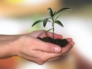 planta-en-crecimiento