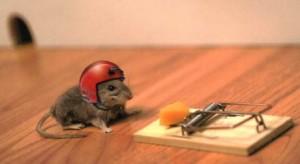 trampa-de-raton